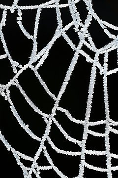 Ice crystals on a spider web, Maynooth, Ireland, 2008