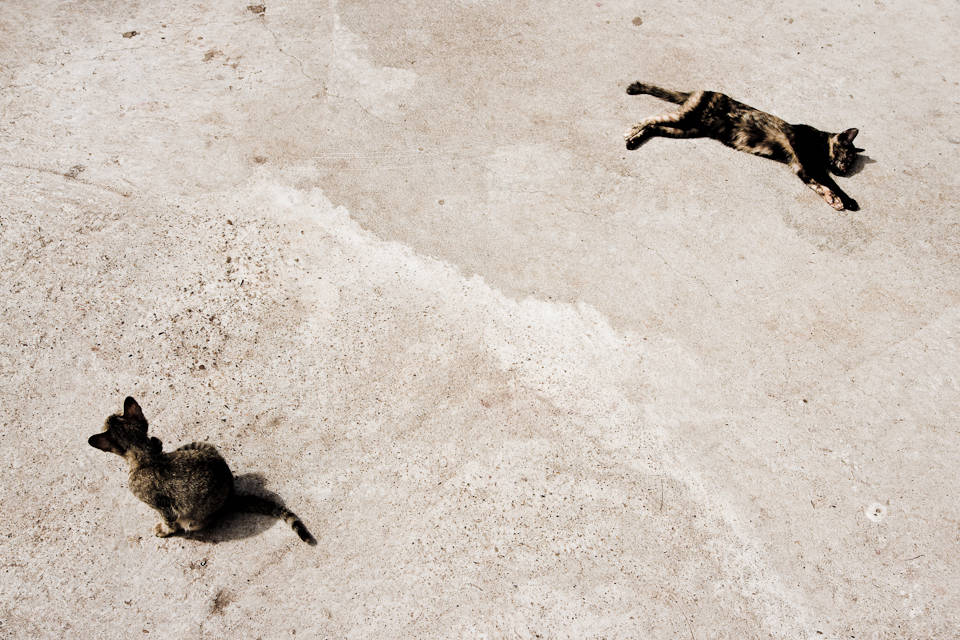 Two street cats at <i>Wat Luang</i>, Pakxé, Laos, 2008